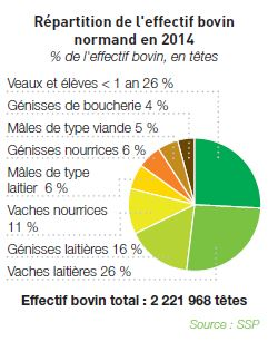 Effectif bovin normand 2014