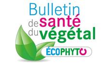 Les bulletins de santé du végétal (BSV)