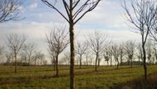 Agroforesterie - Atouts