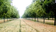 agroforesterie rentabilite