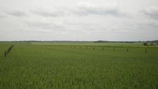 Agroforesterie - Statut