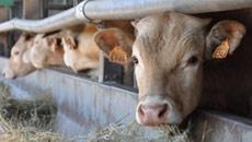 Formation Normandie : Soigner mes bovins par l'aromathérapie
