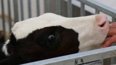 Formation Normandie : Soigner mes bovins par l'aromathérapie - Perfectionnement